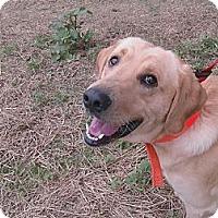 Adopt A Pet :: Dorsett - Harrisburgh, PA