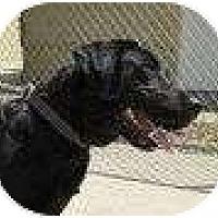 Adopt A Pet :: DYNA - La Mesa, CA