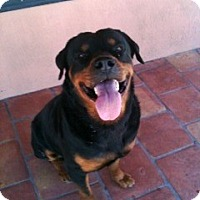 Adopt A Pet :: Red - Pembroke Pines, FL