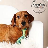 Adopt A Pet :: Bobby - Omaha, NE