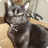 Adopt A Pet :: Rue - Walla Walla, WA