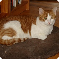 Adopt A Pet :: Ozzie - River Edge, NJ