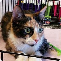 Adopt A Pet :: Sophia - San Ramon, CA