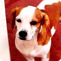 Adopt A Pet :: Monchi - Miami, FL