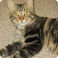 Adopt A Pet :: Bill Murray Needs A Home! - Oberlin, OH
