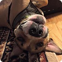 Adopt A Pet :: Dixon - Troy, MI