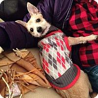 Adopt A Pet :: Boaz - Meridian, ID