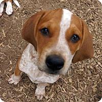 Adopt A Pet :: Mason - Sudbury, MA