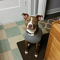Adopt A Pet :: Courtesy post - Tyson - Waterbury, CT