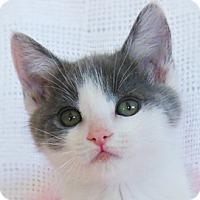 Adopt A Pet :: Sassy - Redondo Beach, CA