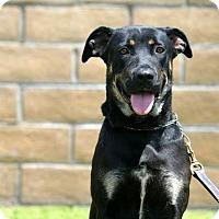 Adopt A Pet :: Priscilla - Downey, CA