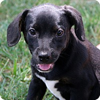 Adopt A Pet :: Jeanna~ meet me~ - Glastonbury, CT