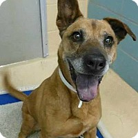 Adopt A Pet :: Max - Palm City, FL