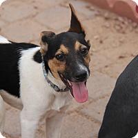 Adopt A Pet :: Cali Roll - Phoenix, AZ