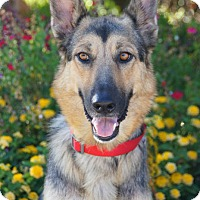 Adopt A Pet :: Portia von Perth - Thousand Oaks, CA
