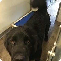 Adopt A Pet :: O'Malley - Queenstown, MD