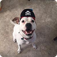 Adopt A Pet :: Eliza - Cleveland, OH