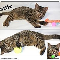 Domestic Shorthair Cat for adoption in Cuba, Missouri - Mattie