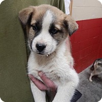 Adopt A Pet :: Gordy - Pikeville, KY