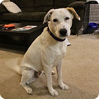 Adopt A Pet :: Susan B. Anthony - Austin, TX