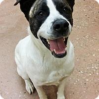 Adopt A Pet :: Hutch *Petsmart GB* - Appleton, WI