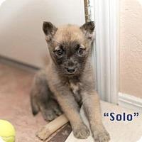 Adopt A Pet :: Solo - Montgomery, AL
