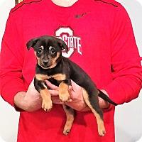 Adopt A Pet :: Chandler - Gahanna, OH