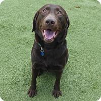 Adopt A Pet :: Chopper - Yorktown, VA