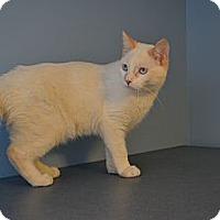 Adopt A Pet :: Jamie Fox - Oyster Bay, NY