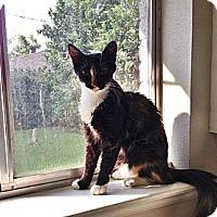 Adopt A Pet :: Chanel - Harvey, LA