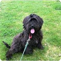 Adopt A Pet :: Bruin - Haverhill, MA