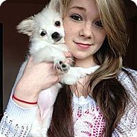 Adopt A Pet :: Pearl - Everett, WA
