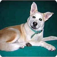Adopt A Pet :: Balto - Portland, OR