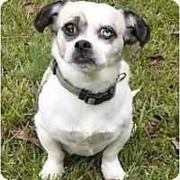 Adopt A Pet :: Duchess - Mocksville, NC