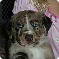 Adopt A Pet :: Eros - Richmond, VA