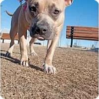 Adopt A Pet :: Maggie - Medicine Hat, AB