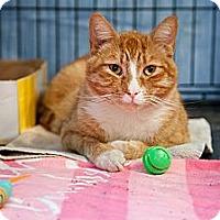 Adopt A Pet :: Sidney - Westfield, MA