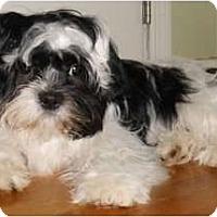 Adopt A Pet :: Murray - Mooy, AL