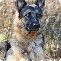Adopt A Pet :: Rosa - Nashville, TN