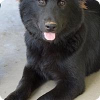 Adopt A Pet :: Kaia - Marietta, GA