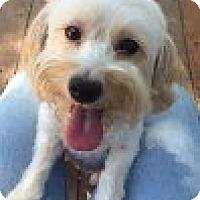 Adopt A Pet :: Canela - Santa Ana, CA