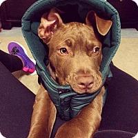 Adopt A Pet :: Thaddeus - Sacramento, CA