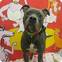 Adopt A Pet :: HENESSY - Santa Monica, CA