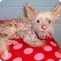 Adopt A Pet :: Herbert - Orlando, FL
