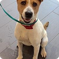 Adopt A Pet :: Bella - Norcross, GA