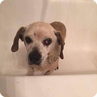Adopt A Pet :: Bama dillert - Creston, CA