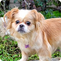 Adopt A Pet :: Beula - 8 pounds - Los Angeles, CA