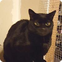 Adopt A Pet :: Buddie - E. Claridon, OH
