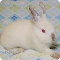 Adopt A Pet :: Rue - Chesterfield, MO