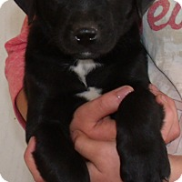 Adopt A Pet :: MICHAEL - Corona, CA